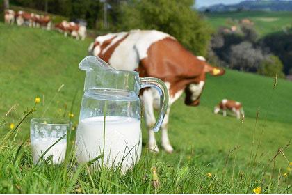 Chương trình khuyến mãi sữa Koko Crown Namyang Hàn Quốc