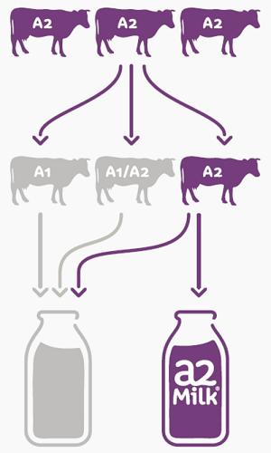 Sữa bột nguyên kem A2 nhập khẩu Úc lon 850g