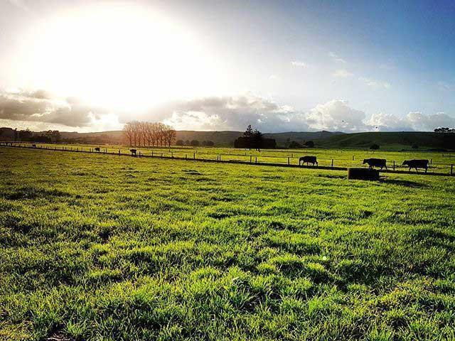 sữa tươi ít béo Anchor hộp 1 lit nhập khẩu New Zealand
