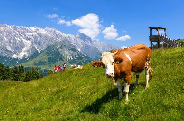 sữa tươi Laciate Ba Lan hương dâu hộp 200ml nhập khẩu