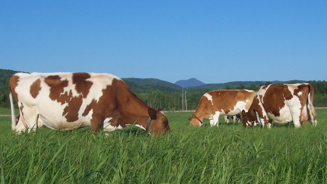 sữa tươi Laciate nhập khẩu Ba Lan vị socola hộp 200ml