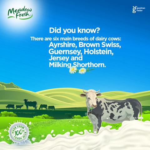 sữa tươi meadow fresh hương dâu hộp 200ml
