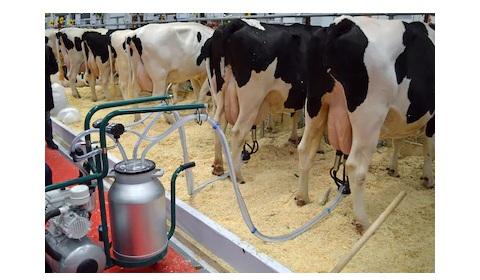 sữa tươi tiệt trùng vinamilk ít đường hộp 180ml