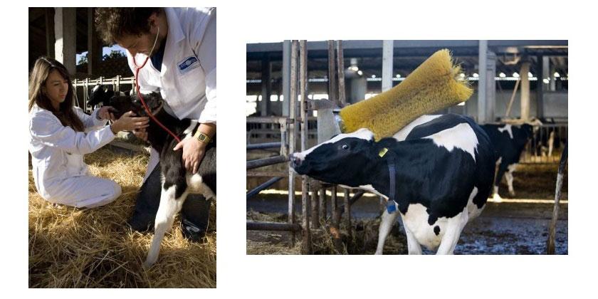 sữa tươi tách kem ít béo Arborea nhập khẩu Ý hộp 200ml