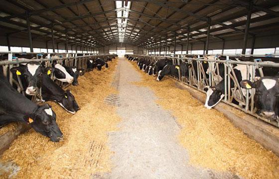 sữa tươi pháp cremiere de france ít béo hộp 1 lit