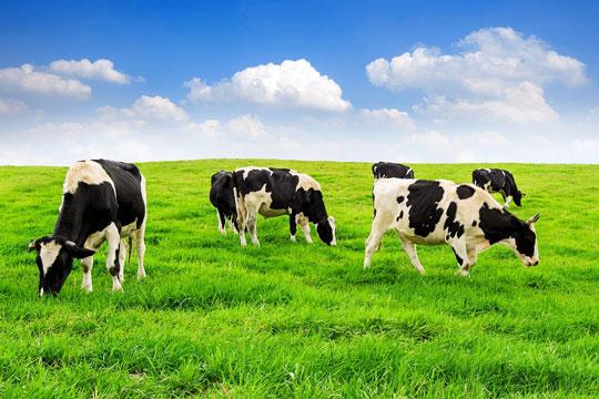 sữa tươi tiệt trùng th true milk hương dâu hộp 110ml