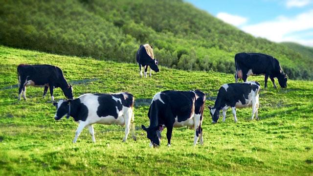 Sữa tươi tiệt trùng có đường True Milk có đường hộp 1 Lít