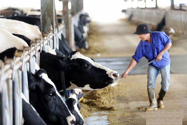 sữa tươi tiệt trùng dalatmilk không đường, hộp 180ml