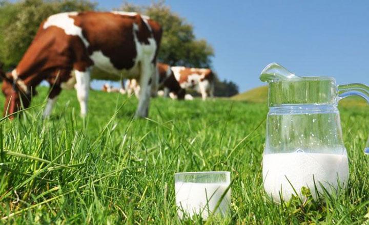 sữa tươi tiệt trùng vinamilk twin cows có đường hộp 1 lít