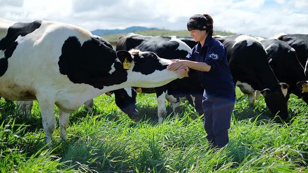 sữa tươi tiệt trùng vinamilk hương dâu hộp 180ml