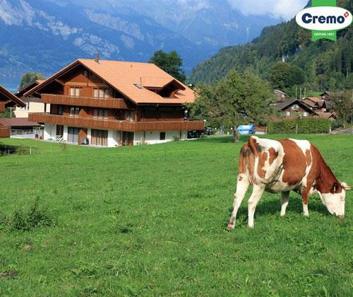 Thùng sữa tươi tiệt trùng Cremo thụy sỹ ít béo không đường Lactose hộp 1 lít